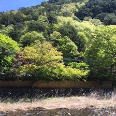 昇仙峡の新緑が綺麗に色付いています(^^)