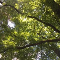 紅葉からの木漏れ日が綺麗です(o^^o)