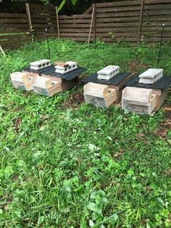 ミツバチを守るため!